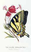Louis Prang and Co. - The Yellow Swallowtail