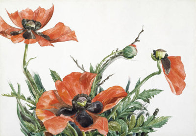 Charles Demuth - Red Poppies