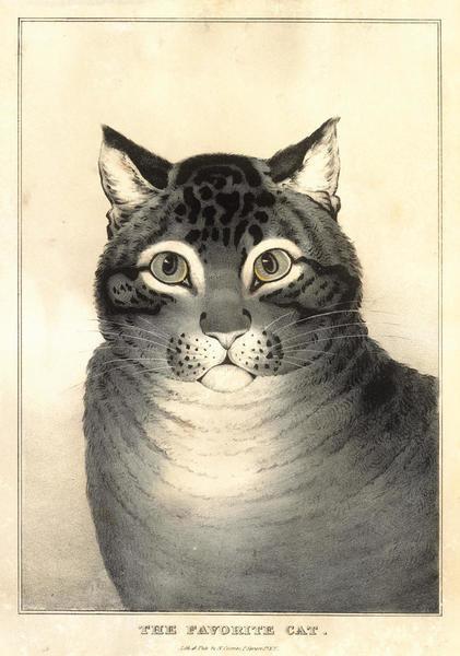 The Favorite Cat by Nathaniel Currier - Paper Print - Met Custom Prints - Custom Prints and Framing From The Metropolitan Museum of Art